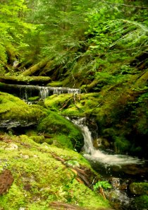 Walking the Forest Primeval: Thunder Creek to McAllister Creek, North Cascades